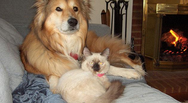 ペットと暮らすソファ